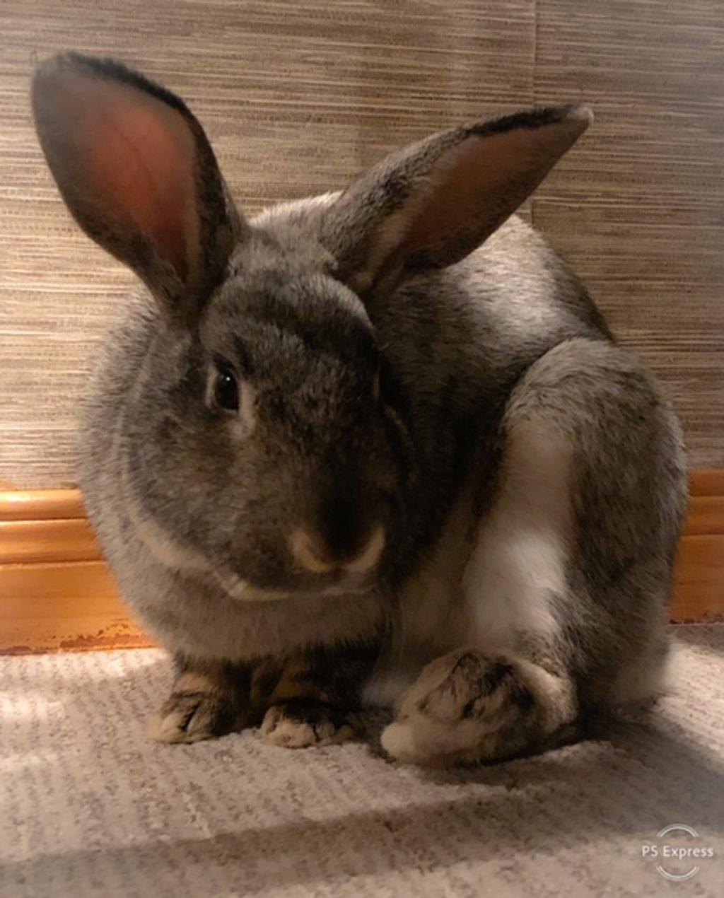 1024   n - Adopt a Small Animal
